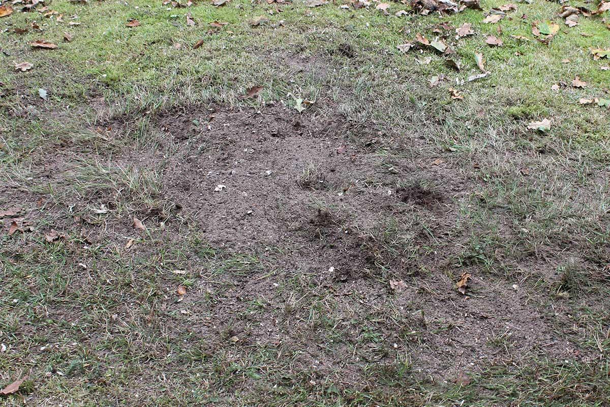 Referensstubben nr 2 Gammal murken och fuktig stubbe med djupt liggande rötter som är helt borttagen med en Stubbskorstenen