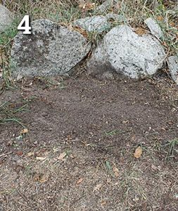 Stubben nära stenmur som är borttagen med en Stubbskorsten och hålet är täckt med jord och gräsfrön