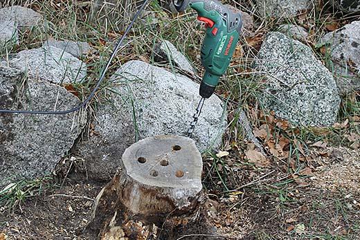 Borra hål i stubben med borrmaskin och ett spiralborr eller centrumborr för att det skall gå fortare att ta bort en stubbe